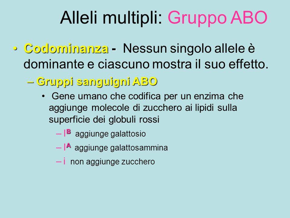 Alleli multipli: Gruppo ABO