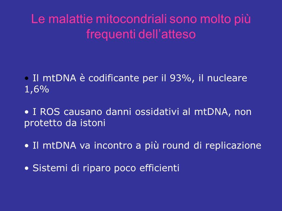 Le malattie mitocondriali sono molto più frequenti dell'atteso
