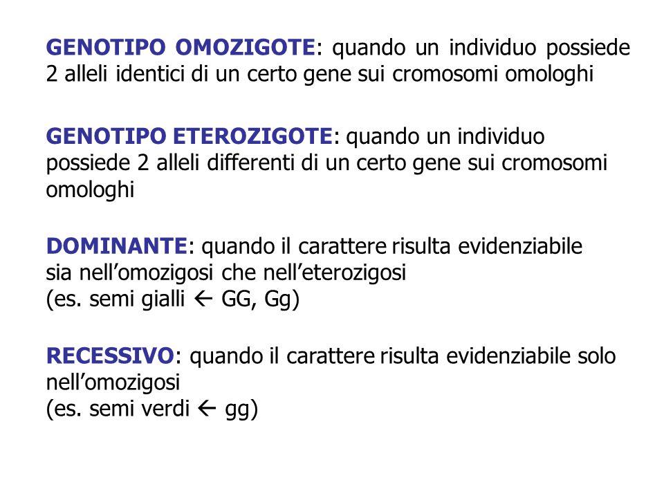 GENOTIPO OMOZIGOTE: quando un individuo possiede 2 alleli identici di un certo gene sui cromosomi omologhi