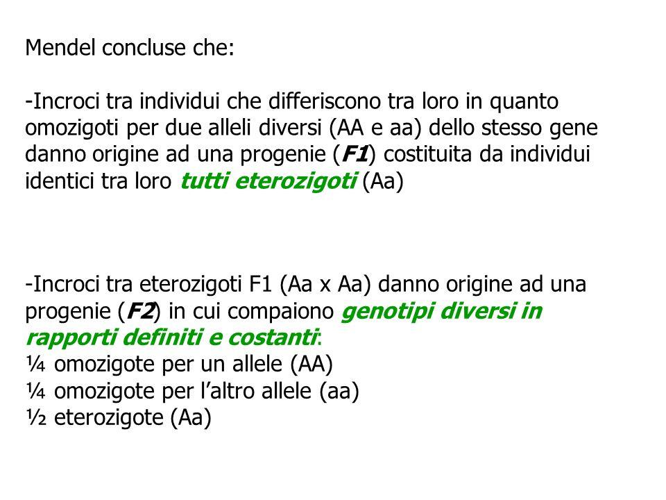 Mendel concluse che: