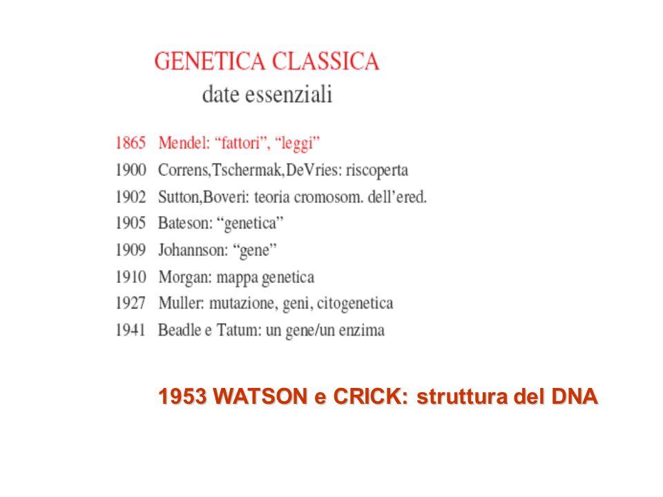 1953 WATSON e CRICK: struttura del DNA