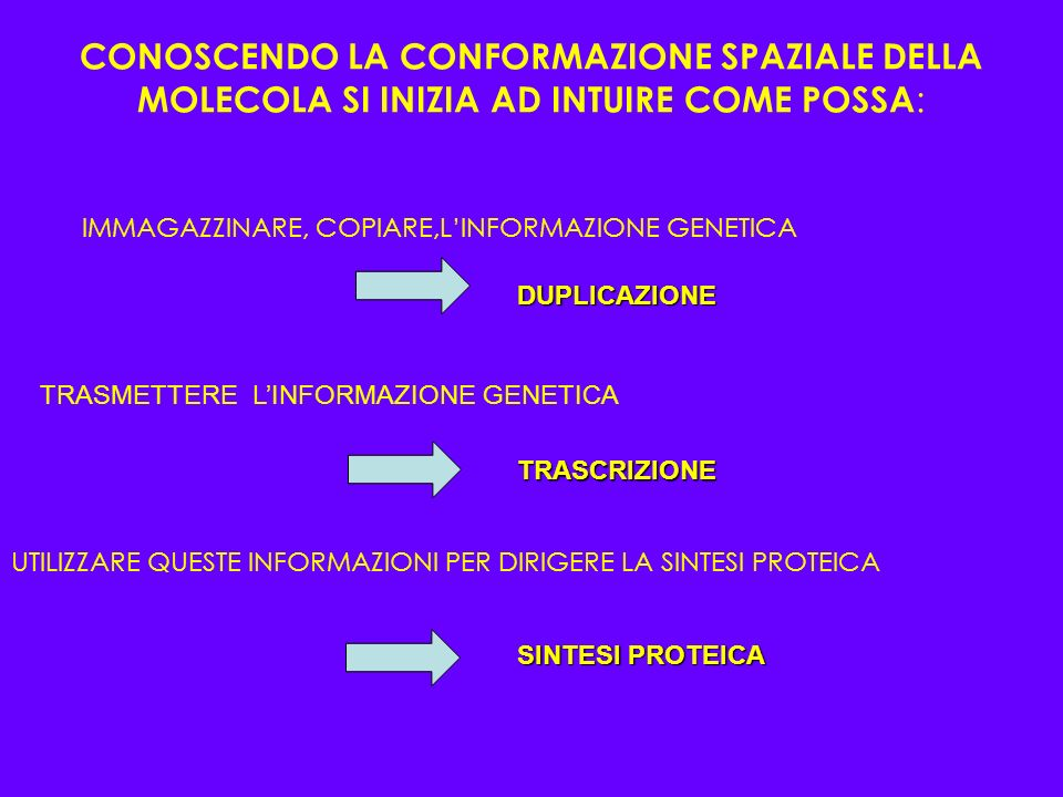 CONOSCENDO LA CONFORMAZIONE SPAZIALE DELLA MOLECOLA SI INIZIA AD INTUIRE COME POSSA: