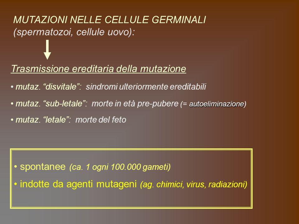 MUTAZIONI NELLE CELLULE GERMINALI (spermatozoi, cellule uovo):