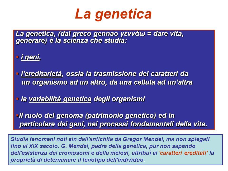 La genetica La genetica, (dal greco gennao γεννάω = dare vita, generare) è la scienza che studia: i geni,