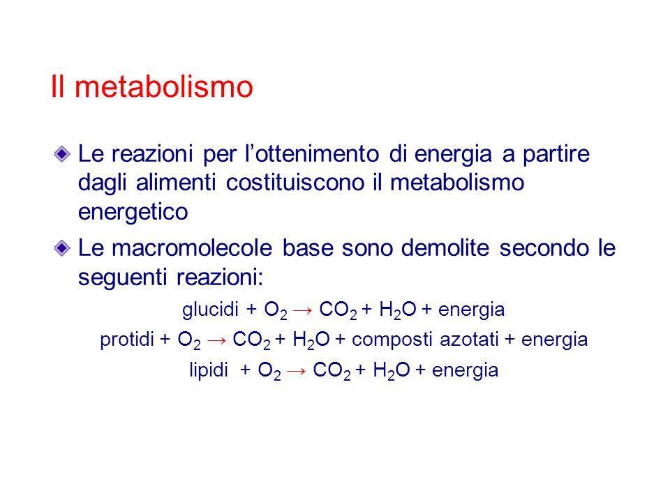 Il metabolismoLe reazioni per l'ottenimento di energia a partire dagli alimenti costituiscono il metabolismo energetico.