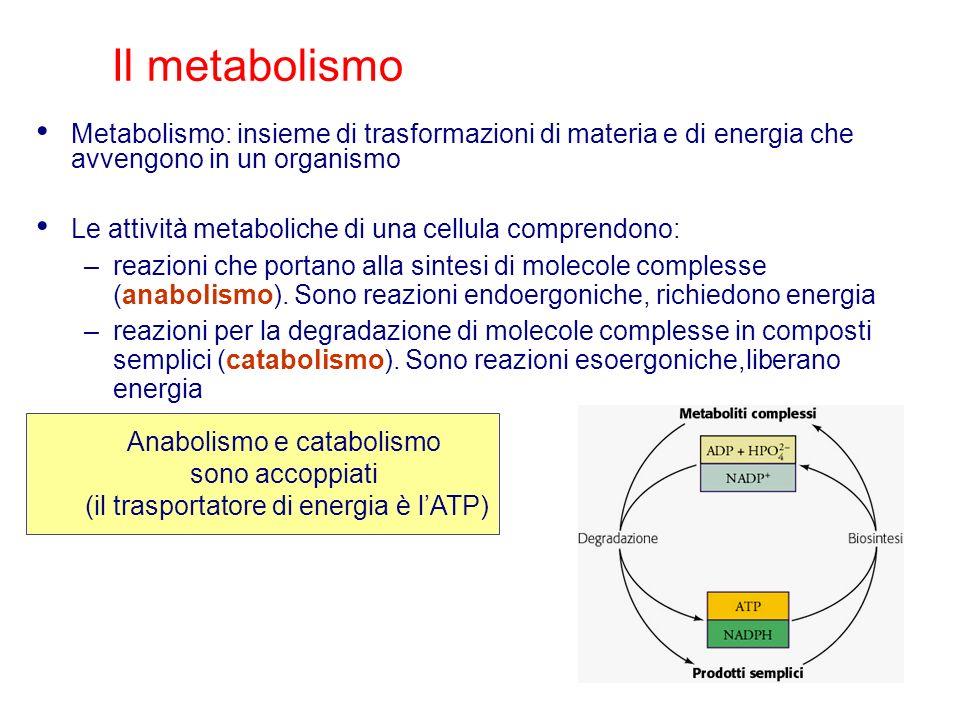Il metabolismo Metabolismo: insieme di trasformazioni di materia e di energia che avvengono in un organismo.