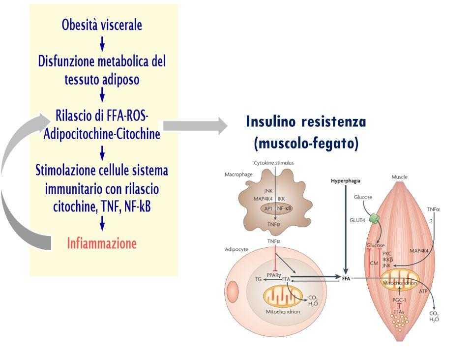 Insulino resistenza (muscolo-fegato)
