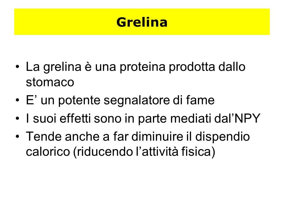 Grelina La grelina è una proteina prodotta dallo stomaco. E' un potente segnalatore di fame. I suoi effetti sono in parte mediati dal'NPY.