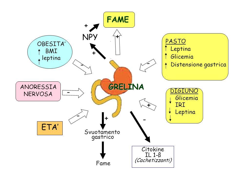 FAME + + NPY + - - GRELINA - + - + - ETA' PASTO OBESITA' Leptina BMI