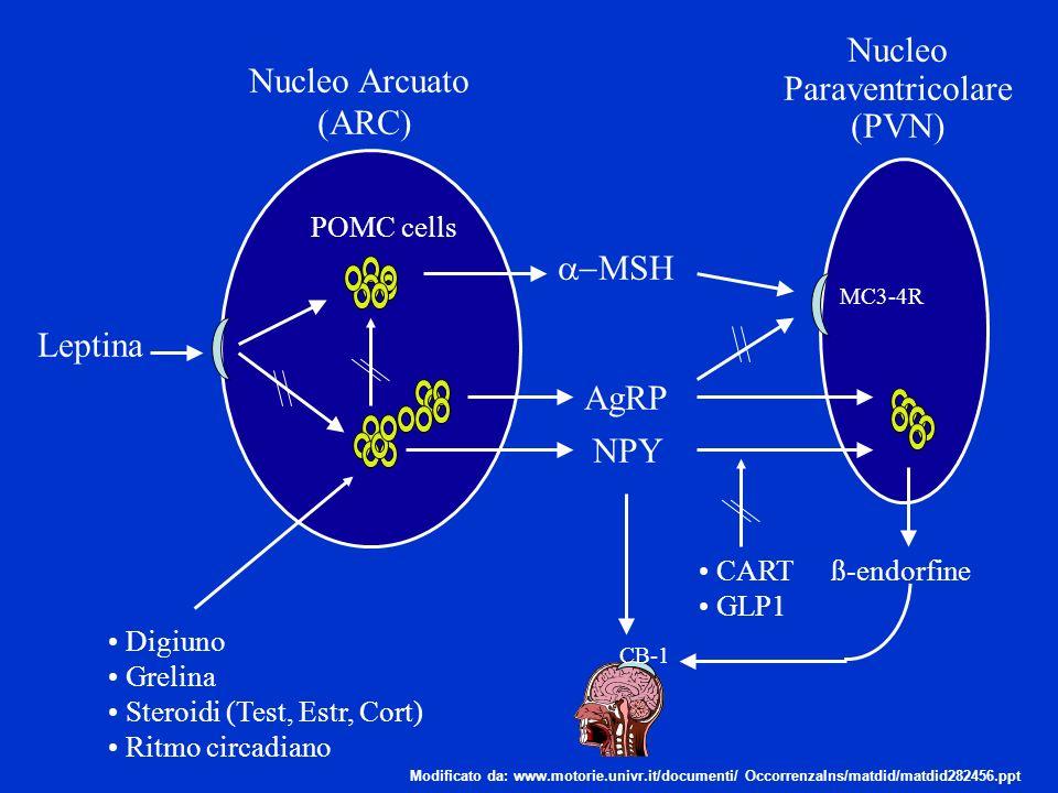 Nucleo Paraventricolare Nucleo Arcuato (PVN) (ARC) a-MSH Leptina AgRP