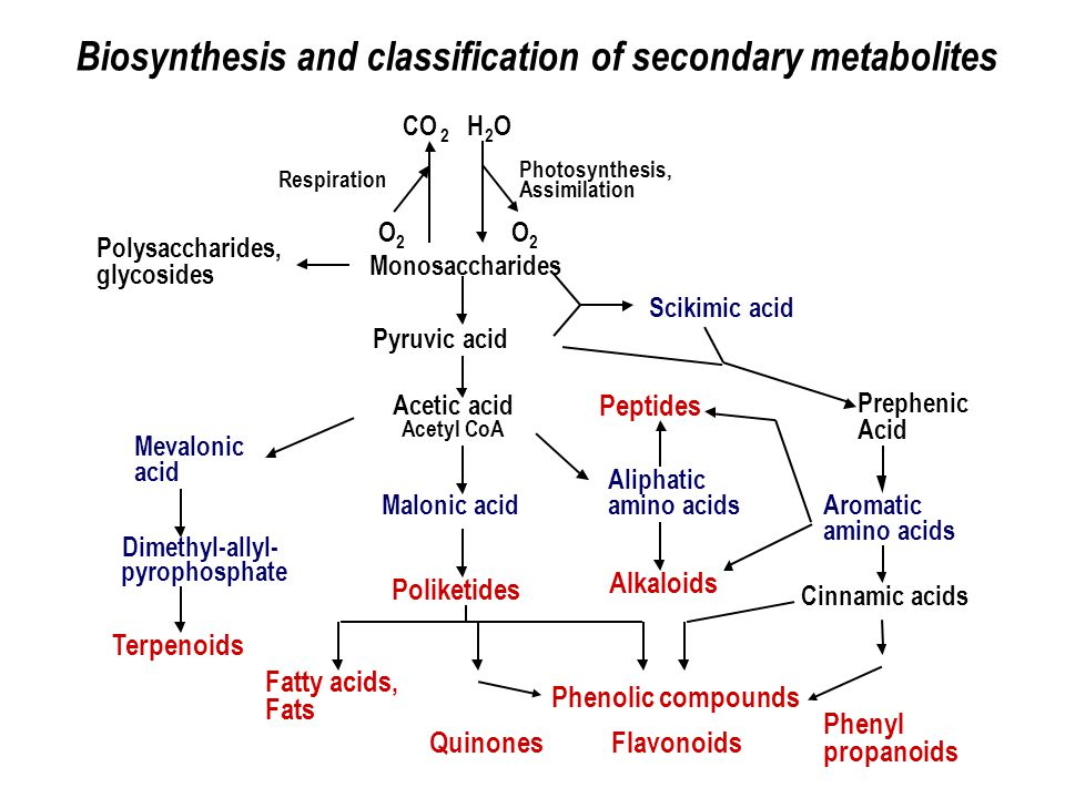 Biosynthesis and classification of secondary metabolites