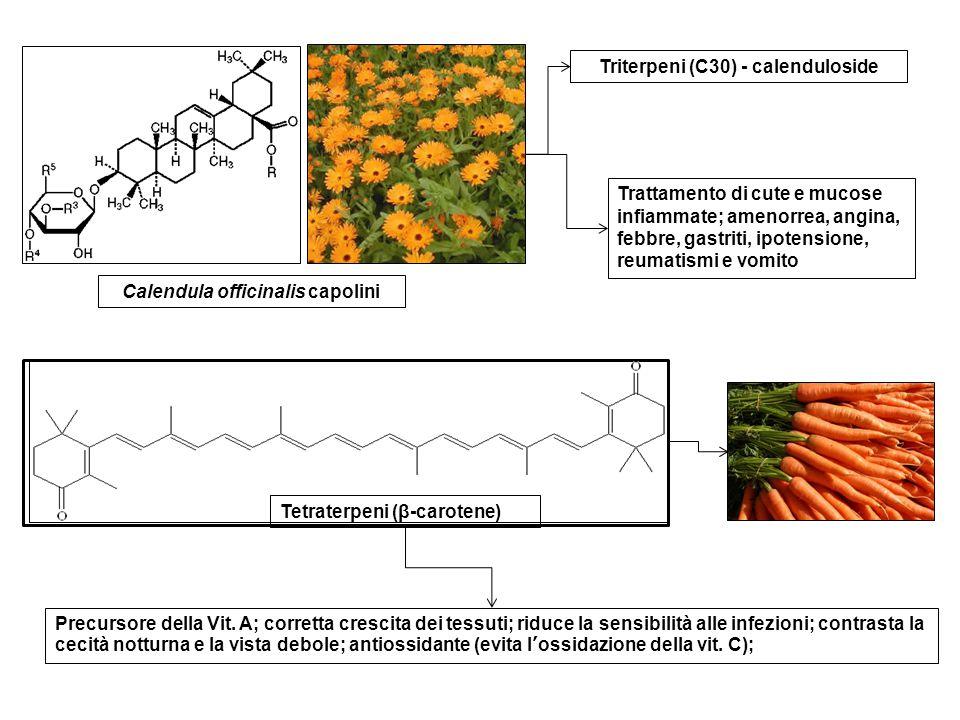 Calendula officinalis capolini Triterpeni (C30) - calenduloside