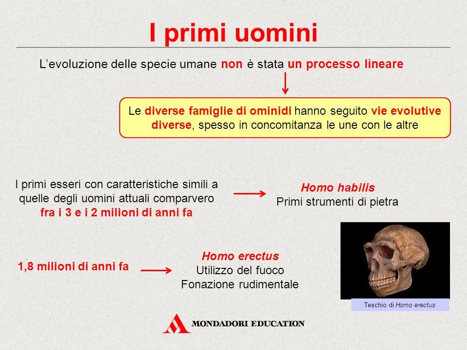 I primi uomini L'evoluzione delle specie umane non è stata un processo lineare.