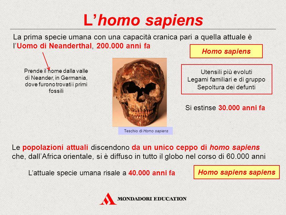 L'homo sapiens La prima specie umana con una capacità cranica pari a quella attuale è l'Uomo di Neanderthal, 200.000 anni fa.