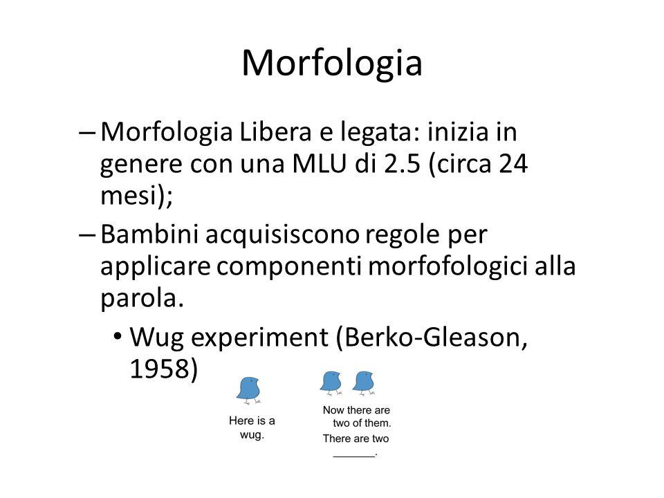 Morfologia Morfologia Libera e legata: inizia in genere con una MLU di 2.5 (circa 24 mesi);