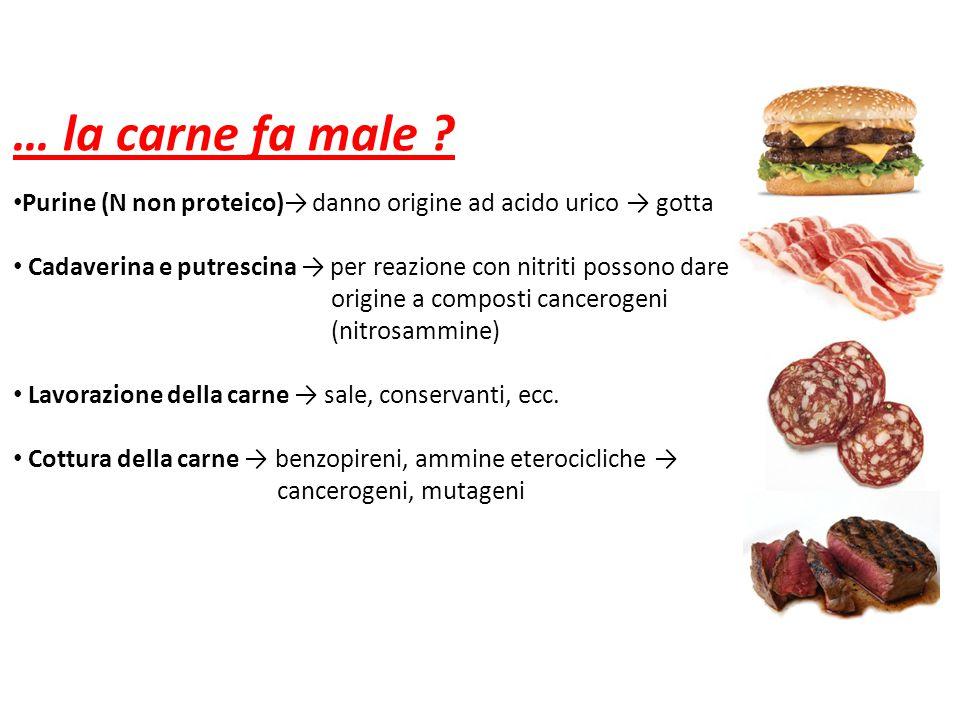 … la carne fa male Purine (N non proteico)→ danno origine ad acido urico → gotta. Cadaverina e putrescina → per reazione con nitriti possono dare.