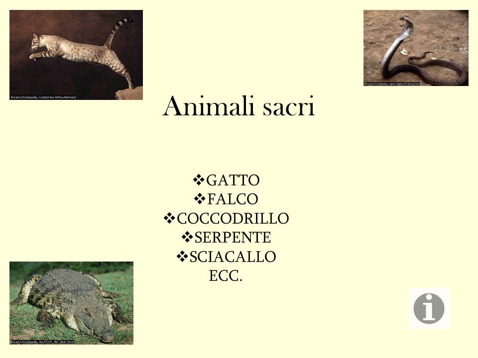GATTO FALCO COCCODRILLO SERPENTE SCIACALLO ECC.