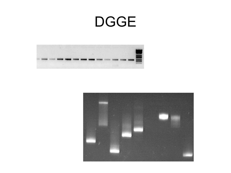 I metodi RFLP SSCP/DGGE/TGGE Ibridazione con sonde oligonucleotidche