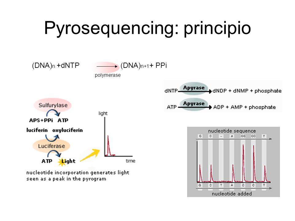 Pyrosequencing: principio