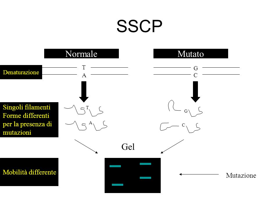 SSCP Normale Mutato Gel Singoli filamenti Forme differenti