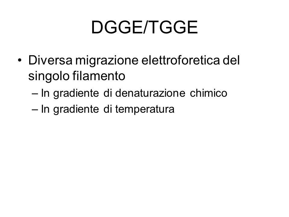 DGGE/TGGE Diversa migrazione elettroforetica del singolo filamento