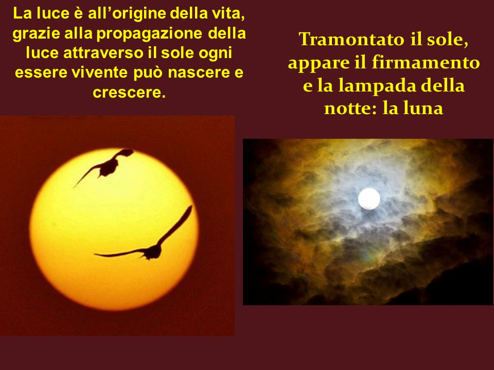 La luce è all'origine della vita, grazie alla propagazione della luce attraverso il sole ogni essere vivente può nascere e crescere.