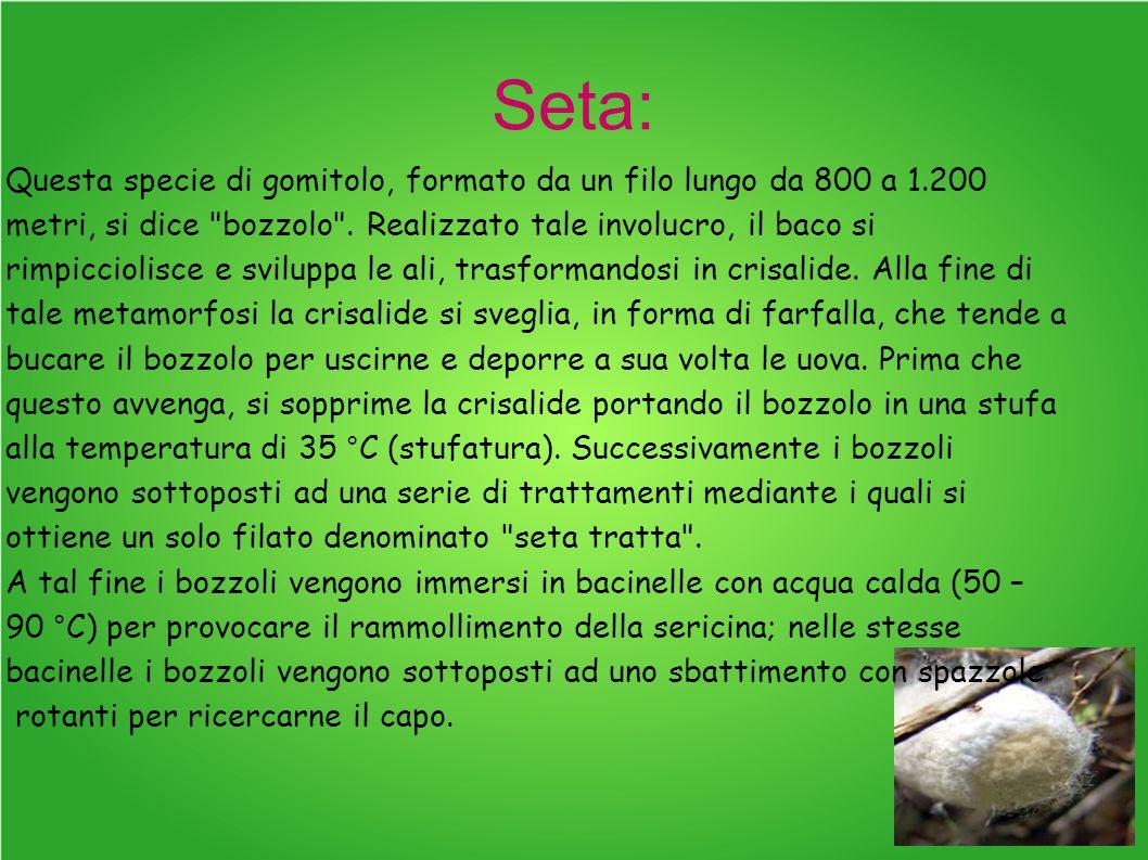 Seta: