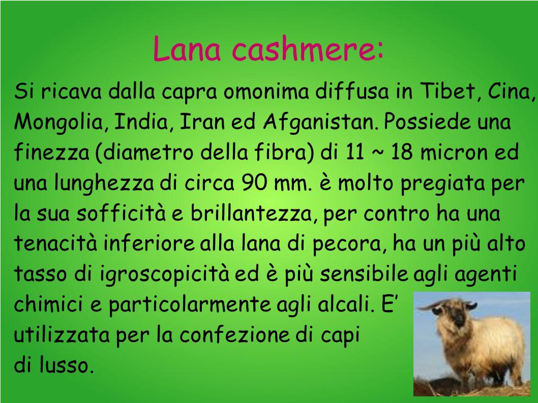 Lana cashmere: