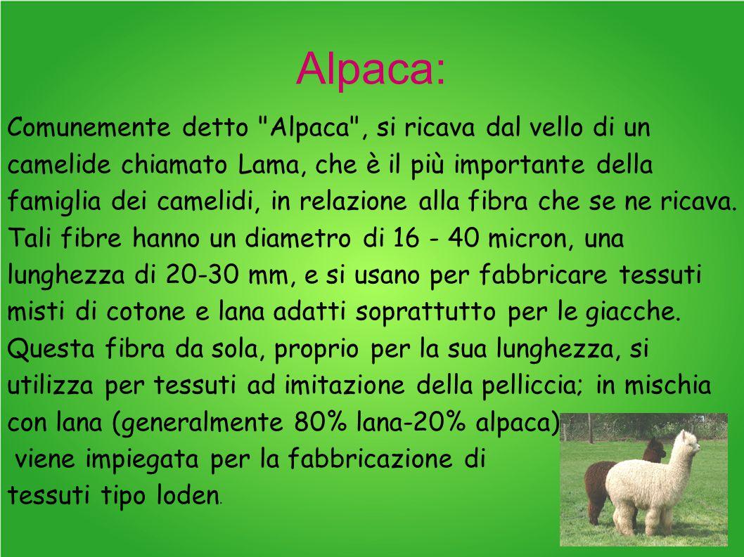 Alpaca:
