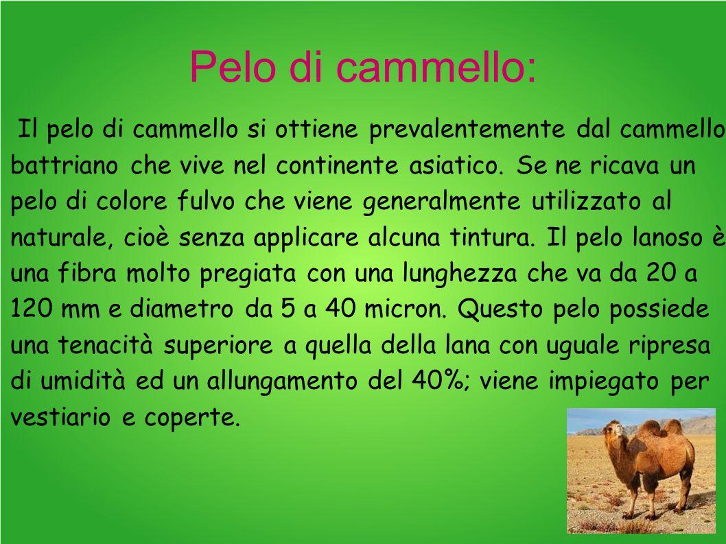 Pelo di cammello: