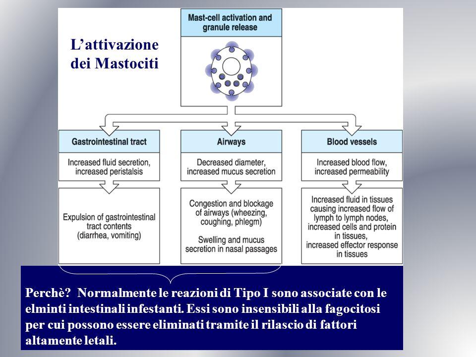L'attivazione dei Mastociti