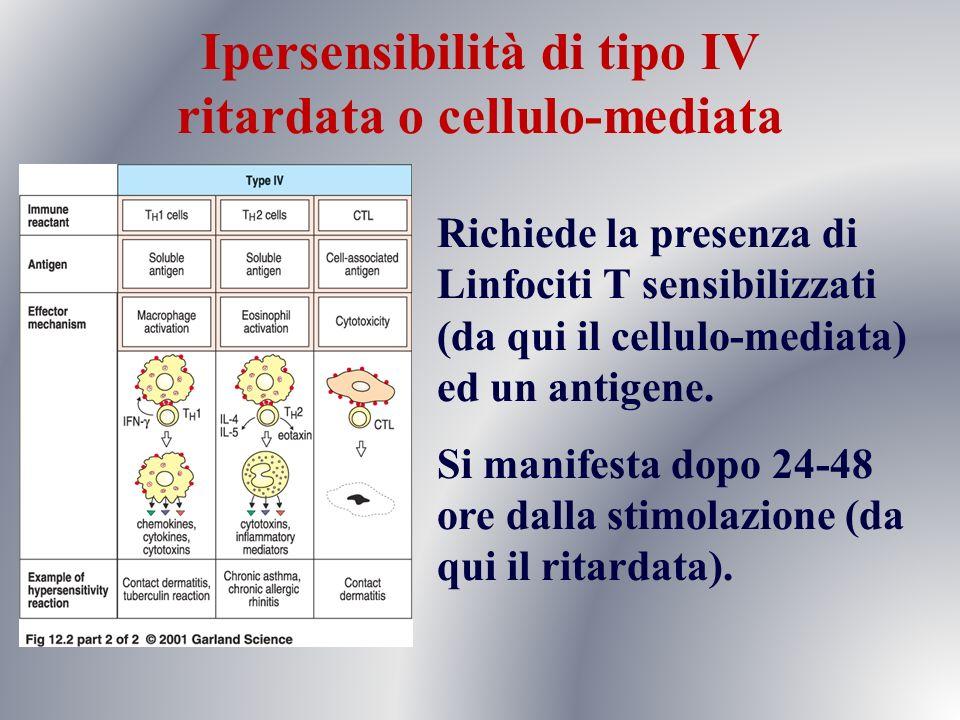 Ipersensibilità di tipo IV ritardata o cellulo-mediata