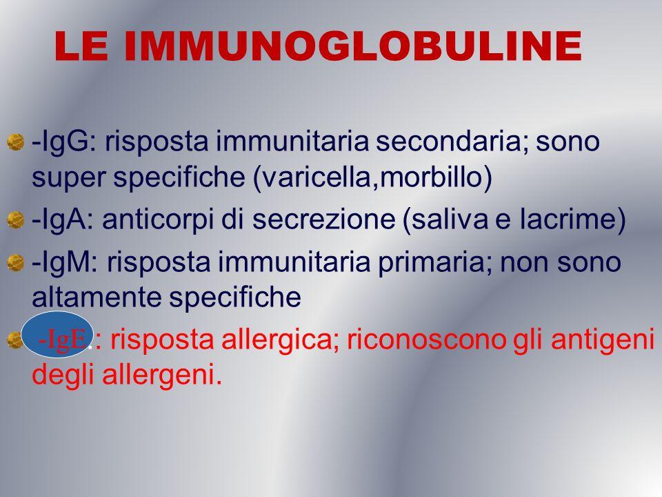 LE IMMUNOGLOBULINE -IgG: risposta immunitaria secondaria; sono super specifiche (varicella,morbillo)