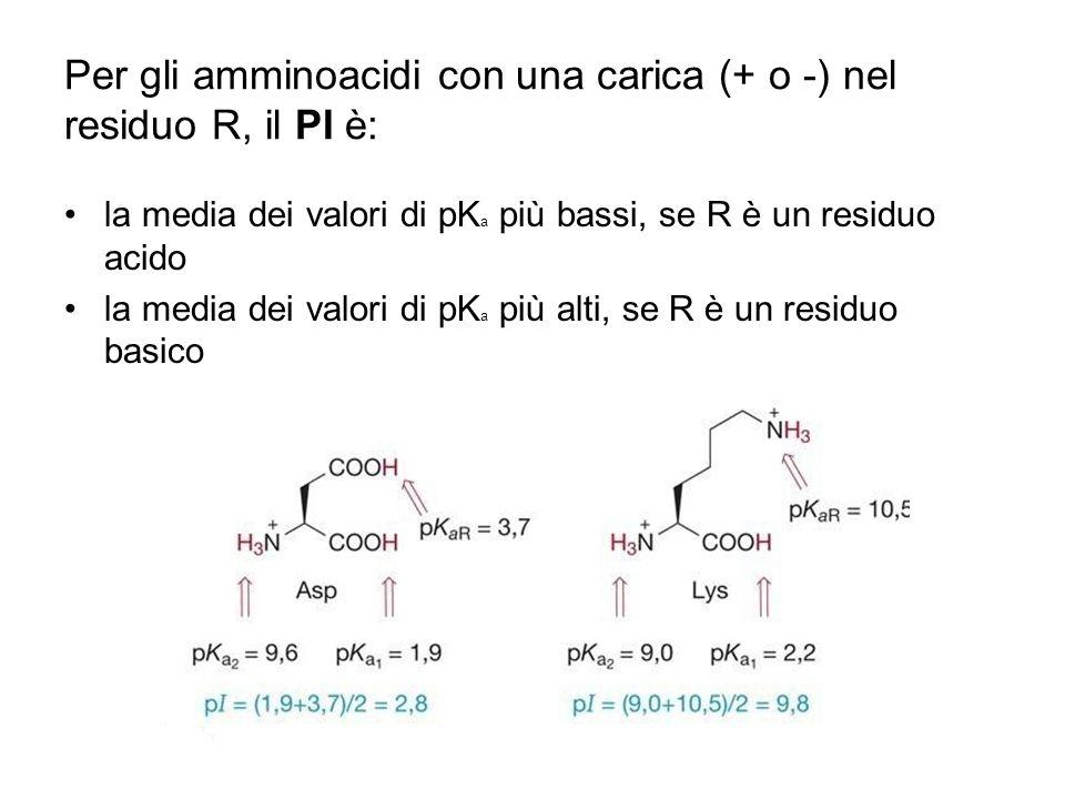 Per gli amminoacidi con una carica (+ o -) nel residuo R, il PI è: