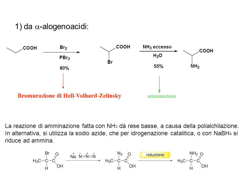 da a-alogenoacidi: La reazione di amminazione fatta con NH3 dà rese basse, a causa della polialchilazione.