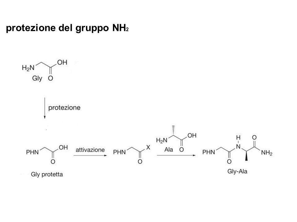 protezione del gruppo NH2