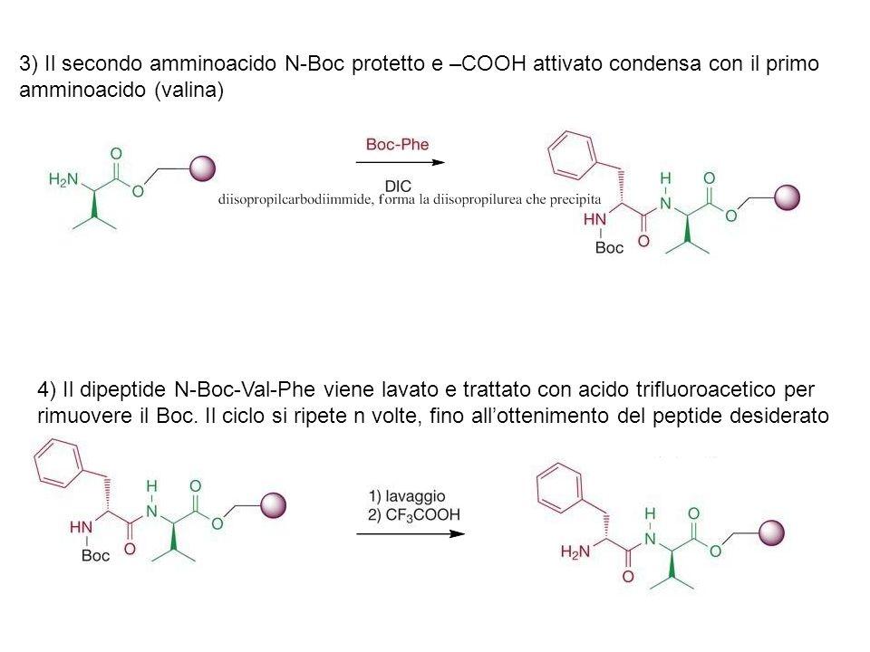 3) Il secondo amminoacido N-Boc protetto e –COOH attivato condensa con il primo