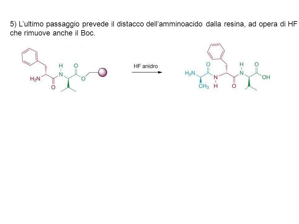 5) L'ultimo passaggio prevede il distacco dell'amminoacido dalla resina, ad opera di HF