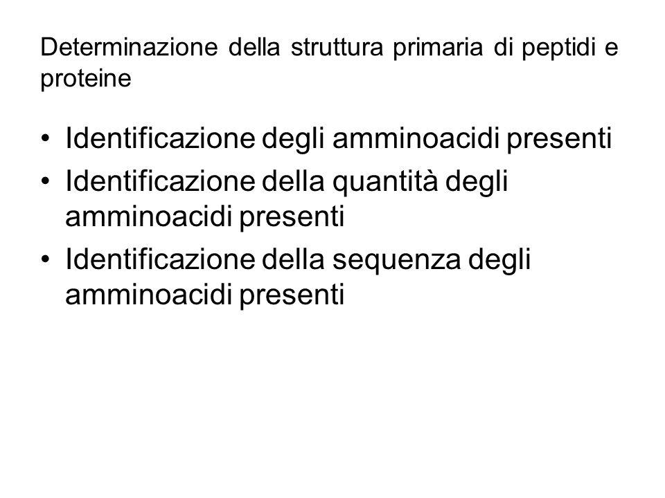 Determinazione della struttura primaria di peptidi e proteine