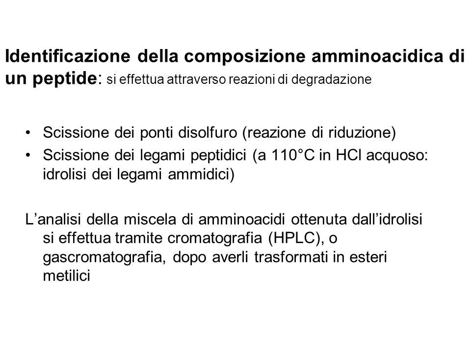 Identificazione della composizione amminoacidica di un peptide: si effettua attraverso reazioni di degradazione