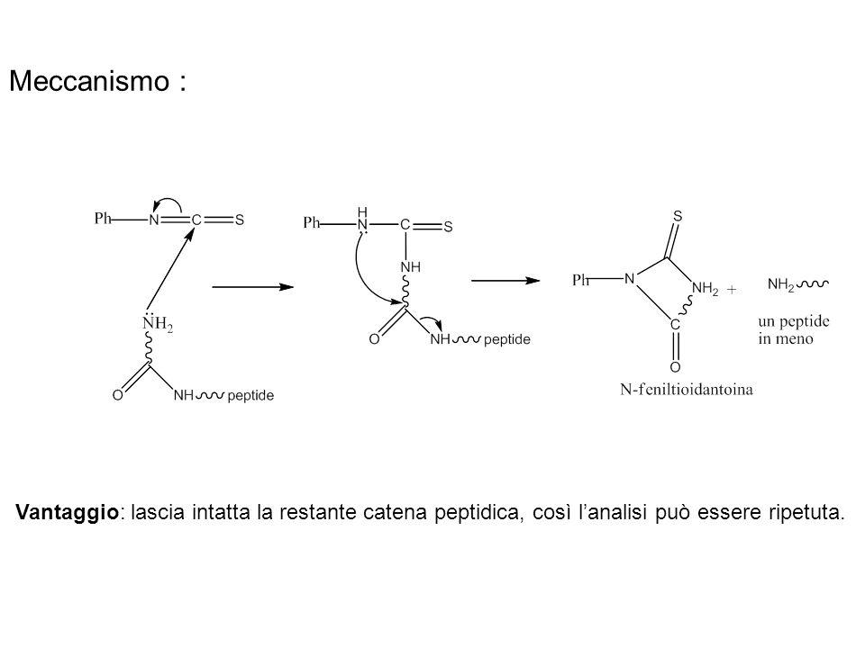 Meccanismo : Vantaggio: lascia intatta la restante catena peptidica, così l'analisi può essere ripetuta.