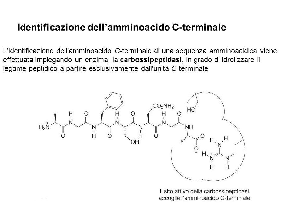 Identificazione dell'amminoacido C-terminale
