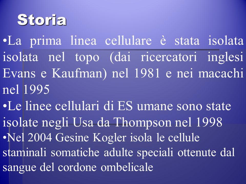 Storia La prima linea cellulare è stata isolata isolata nel topo (dai ricercatori inglesi Evans e Kaufman) nel 1981 e nei macachi nel 1995.