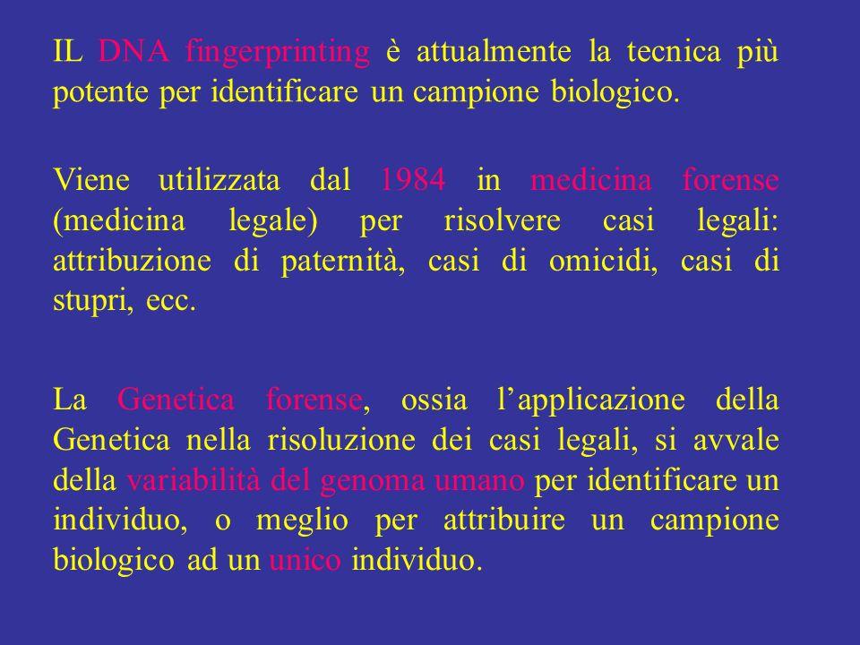 IL DNA fingerprinting è attualmente la tecnica più potente per identificare un campione biologico.