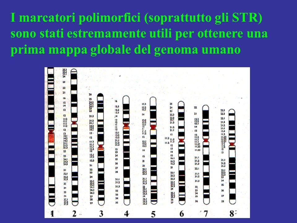 I marcatori polimorfici (soprattutto gli STR) sono stati estremamente utili per ottenere una prima mappa globale del genoma umano