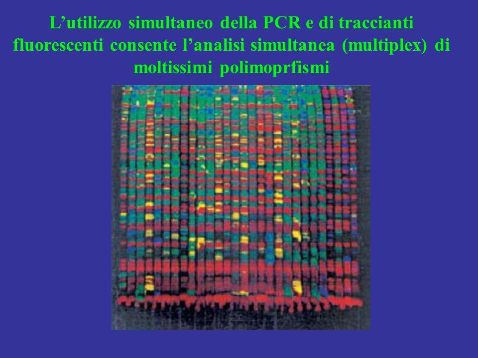 L'utilizzo simultaneo della PCR e di traccianti fluorescenti consente l'analisi simultanea (multiplex) di moltissimi polimoprfismi