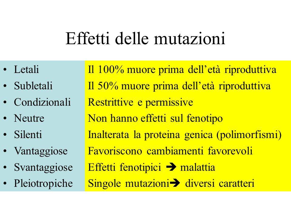 Effetti delle mutazioni