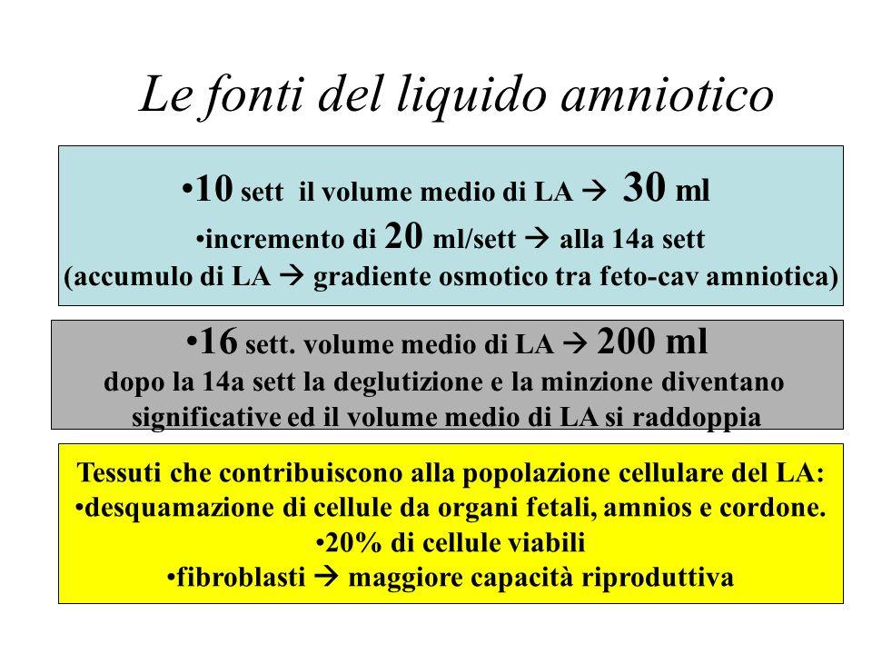 Le fonti del liquido amniotico