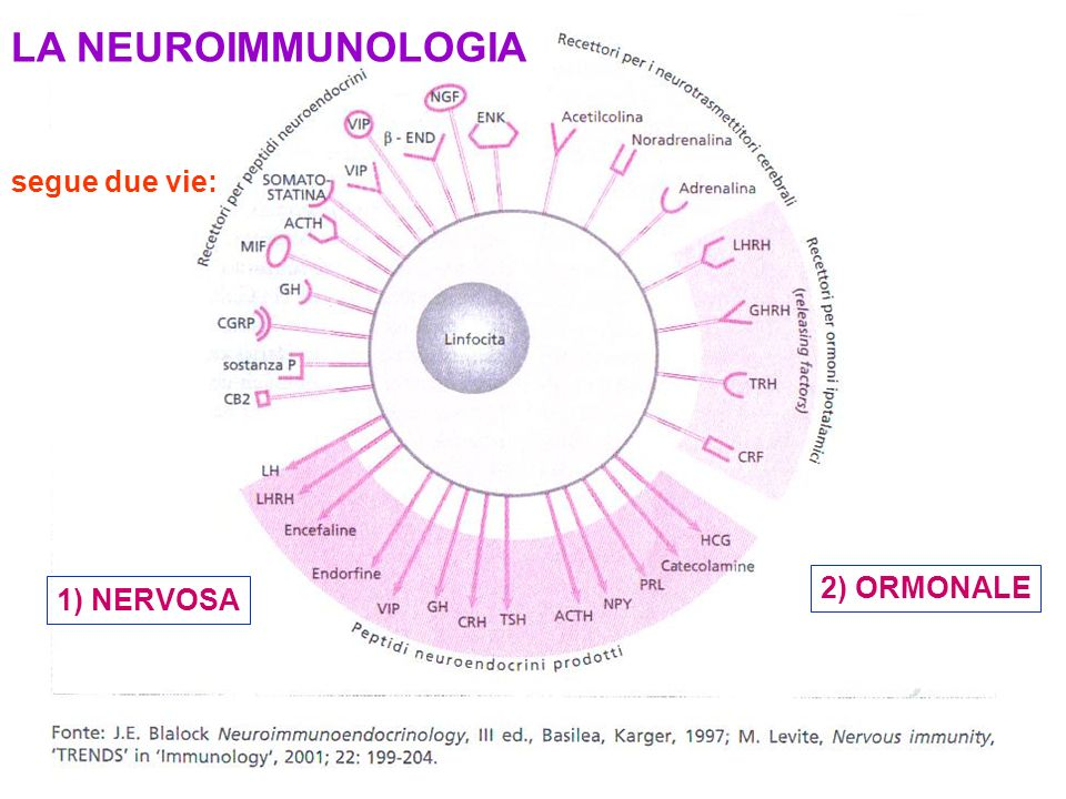 LA NEUROIMMUNOLOGIA segue due vie: 2) ORMONALE 1) NERVOSA