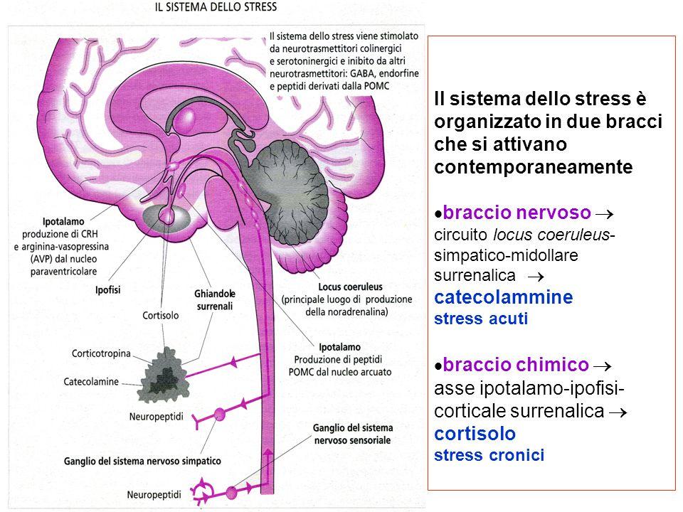 Il sistema dello stress è organizzato in due bracci che si attivano contemporaneamente braccio nervoso  circuito locus coeruleus-simpatico-midollare surrenalica  catecolammine stress acuti braccio chimico  asse ipotalamo-ipofisi-corticale surrenalica  cortisolo stress cronici